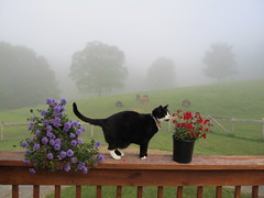 peace & spring mist ... (october blue) Tags: thegalaxy autofocus greatphotographers saairysqualitypictures