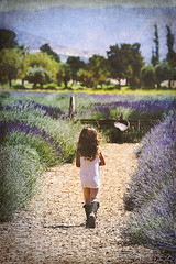 12th Annual Lavender Festival, Cherry Valley 6.17.16 9 (Marcie Gonzalez) Tags: california county ca flowers usa flower color field festival america cherry botanical photography us photo purple riverside farm united north harvest lavender calif resort southern highland socal cal springs valley fields botanic farms states gonzalez marcie beaumont purples so highlandspringsresort 123ranch