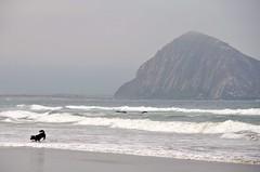 Cayucos Dog Beach (Pedestrian Photographer) Tags: ocean dog beach rock bay play pacific friendly cayucos morro morrow ribbet dsc3427b