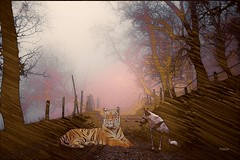 #photography #nature #forest #dog  #edit #art #collage #tiger #dream #fantastic #artwork #freeart #effect #pencilart #pastel #drawing #guaj #photodesign #illustration #edited #petsandanimals (mrbrooks2016) Tags: illustration effect freeart collage photography tiger dream forest artwork edited photodesign drawing petsandanimals guaj nature art pastel edit pencilart fantastic dog