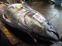 Tokyo 2015 (hunbille) Tags: morning fish japan tokyo market auction tsukiji tuna fishmarket wholesale