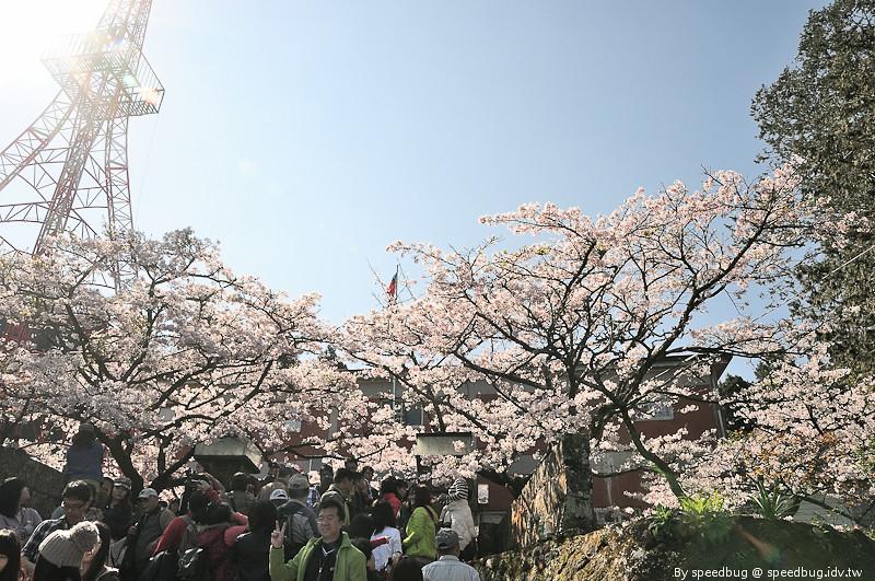 阿里山櫻花季48