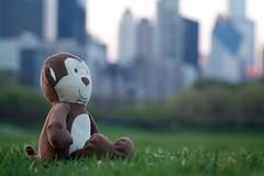 Spring Monkey (Philocycler) Tags: sunset chicago smile grass skyline bokeh chicagoskyline chicagoist stuffedaniimal springmonkey