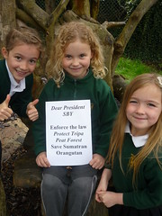 West Ashton School, Trowbridge, Wiltshire, England (endoftheicons) Tags: orangutan internationaldayofaction