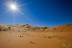 The Desert (TARIQ-M) Tags: shadow sun sunlight texture sahara landscape sand waves pattern desert ripple patterns dunes wave ripples rays  riyadh saudiarabia   canoneos5d    goldensand           canonef1635mmf28liiusm dahna canoneos5dmarkii          aldahna