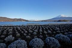 Lake Kawaguchi (Thomo13) Tags: lake japan canon eos fuji mt mark ii 日本 5d 富士山 kawaguchi gettyimagesjapan12q2