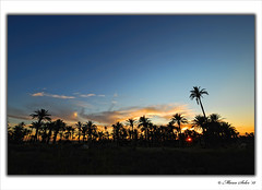 El Palmeral ( Marco Antonio Soler ) Tags: sunset espaa contraluz landscape atardecer spain flora nikon el iso enero alicante jpg 12 palmera ocaso hdr 2012 alacant palmeral digitalcameraclub a d80 blinkagain