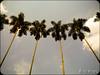 inseparables (DiegoMolano) Tags: trees arboles palmeras autonoma palmas universidadautonoma cruzadasgold cruzadasi