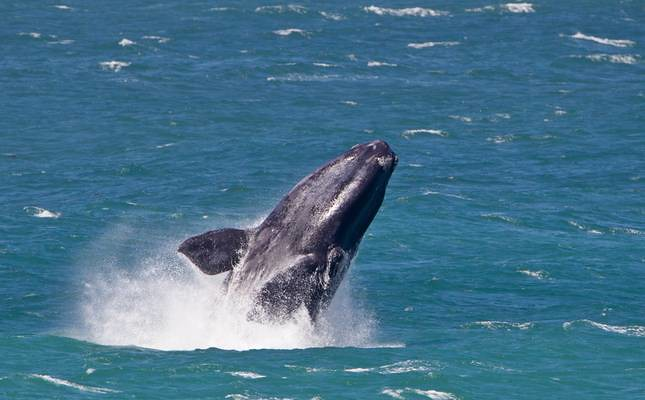 south-Africa-a-whale-of-a-time-3