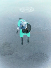 Laika (Mvaliente) Tags: animales pesadillaantesdenavidad perras flickrandroidapp:filter=none