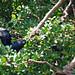 Manyara_2012 05 29_2197