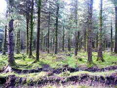 Wild Woods (Chris Kealy) Tags: county wood trees ireland irish mountains tree beautiful rural forest woodland garden landscape countryside moss woods bare scenic co remote desaturated stark wicklow barren isle emerald ire