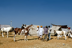 Marwari Horses, Men, Moustaches and Rajasthan (Anoop Negi) Tags: horse india cattle fair camel pushkar rajasthan marwar nefi ezee123 marwari ajmeranoop