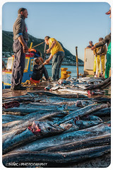 Kalk Bay Fishermen -6 (Marc+Photography.) Tags: sea color colour southafrica boats boat fisherman fishermen bright harbour capetown fishingboats catchy kalkbay snoek catchingfish seaharbour kalkbayharbour marcphotography marcplusphotography marcodendaal