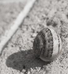 Lumaca (giolor89) Tags: bw white black nikon snail bn lumaca bianco nero j1