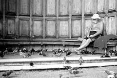 Contemplation... (hethelred) Tags: park leica old bw man london pigeon hyde contemplation m9 fancier