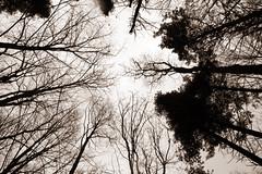 Up top (~Bella189) Tags: coaticook beautifulworldchallenges yourockwinner pentaxk5 agcgsweepwinner