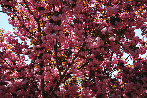 Tree Blossoms  –|–