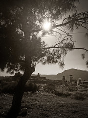 Leaving Xantos (VillaRhapsody) Tags: tree ancient roman historical lycian preroman xantos likia knk