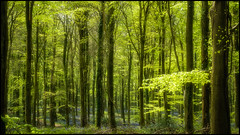 If you go down to the woods today.jpg (Darren Wilkin) Tags: trees light woods angmering fcbs