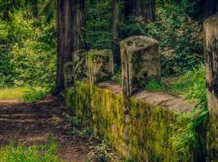 miller house ruins 10.jpg (susanm53@verizon.net) Tags: california stone wall moss ruins mtmadonna millerhouse