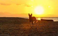 Dog and sunrise (Ahmed Dardig) Tags: travel sea dog sun animals sunrise landscape photography dahab redsea egypt mount explore explored southsinai rasabugalum risitsun