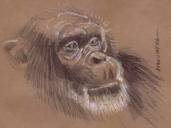 mono a lapicero (ivanutrera) Tags: wild pen monkey mono sketch drawing wildlife sketching draw dibujo lapicero boligrafo dibujoalapicero dibujoenboligrafo