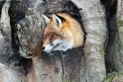 IMG_8530 (u.wittwer) Tags: park zoo schweiz switzerland tiere suisse tierpark heimat arth naturpark goldau widi