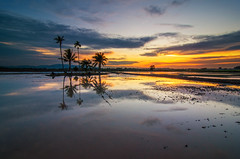 Island Of Trees in Reflection (nadzli.azlan7) Tags: trees sunset sky reflection tree art nature water colors beautiful beauty clouds reflections landscape landscapes amazing artistic paddy cloudy sunsets reflect malaysia coconuttree penang paddyfield naturelovers amazingsky naturebeauty artofnature