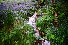 Spring (strzez wartosci) Tags: film analog forest scotland highlands minolta hiking rangefinder trail westhighlandway minoltahimatic