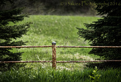 Separating lines (HFF) (13skies) Tags: trees green fence sony country friday pinetrees borders divided countryroad hff greenfields metalfence fencefriday happyfencefriday sonya99 13skies