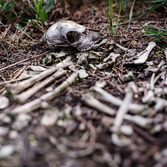 Leftover (brenkee) Tags: rabbit abandoned film nature zeiss death skull iso100 lomography tube spooky hasselblad carl bones 28 extension planar cruel 80mm 500cm