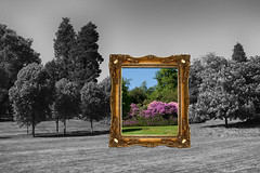 In The Frame (Lynne Mitchell) Tags: pink trees white black colour rhododendron frame azalea deeside crathes