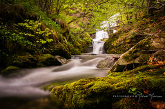 Forest Spirit (BetweenHeartandArt) Tags: mountain montagne forest foret riviere river torrent green water fall