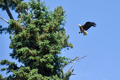 Food Delivery (jah_1315) Tags: eagle lake woods wildlife fishing