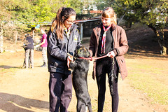 Mutcusco (Escoteiros do Brasil - Rio Grande do Sul) Tags: cats dogs gatos rover cachorros ramo riograndedosul ongs rovers viralatas voluntariado pioneiro viamo pioneiros escoteirosdobrasil