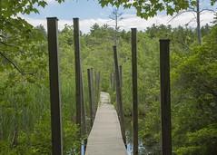 Swamp Walk (ethansoule) Tags: lake swamp boardwalk catwalk squamlake squam