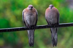 Le vol est le moment d'tre avec toi. (- Ali Rankouhi) Tags: love rain birds wire iran tehran
