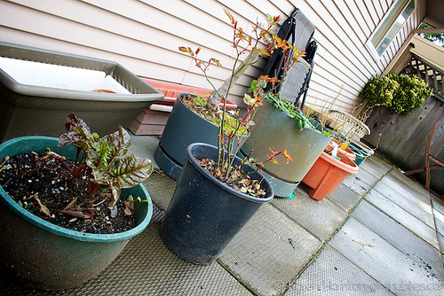 Patio container garden, Mar 2012