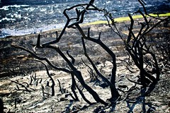 Burned (j4mie) Tags: wood trees black wales fire vegetation gower soot burned charred