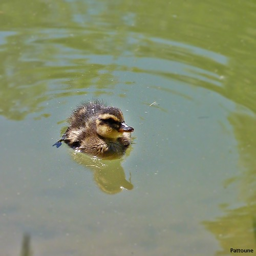 MAMAN, JE SAIS NAGER !!  / MOM, I KNOW HOW TO SWIM!!