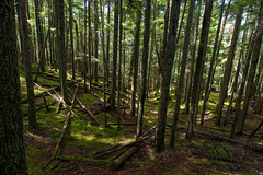 Trees in Moran State Park (absencesix) Tags: travel trees summer sky plants usa sun sunlight green nature colors weather june forest iso200 washington moss seasons unitedstates noflash northamerica orcasisland olga sanjuanislands lightandshadow pinetrees locations 2012 locale dappledsunlight 14mm moranstatepark sprucetrees geo:state=washington exif:iso_speed=200 1424mmf28 apertureprioritymode hasmetastyletag hascameratype naturallocale selfrating4stars exif:focal_length=14mm camera:make=nikoncorporation afsnikkor1424mmf28g 113secatf80 exif:make=nikoncorporation geo:countrys=usa exif:lens=140240mmf28 exif:aperture=80 subjectdistanceunknown nikond800e 2012travel exif:model=nikond800e camera:model=nikond800e june172012 orcasisland0617201206182012 geo:city=olga geo:lon=12283382167 geo:lat=4866947533 484010n122502w olgawashingtonusa