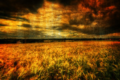 The Field In The Golden Hour (manual_exp) Tags: uk blue trees sunset summer england sky nature beautiful grass clouds canon landscape evening colours darkness silhouettes peaceful textures fields malton fantasty 5dmk2