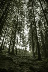 Forest sunlight (spookst) Tags: trees light sun forest path wide