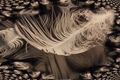Soft as the Voice of an Angel (Aum Kleem) Tags: white black art illustration photomanipulation manipulated interesting experimental foto creative feather surreal manipulation imagination fractal abstracto photoart photomanipulated refleciton digitallyenhanced neutro jimreeves thegalaxy indefinido emblemático fantasioso impredecible graphicc librepersonal septimuswinner revleciton softasthevoiceofanangel