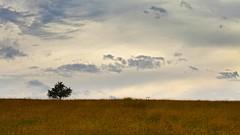 Favourite Tree IV. (Sebastian.Schneider) Tags: sky cloud tree nature clouds germany landscape deutschland scenery skies hessen cloudy country natur himmel wolke wolken scene telephoto land tele landschaft baum wolkig ldk haiger lahndillkreis lahndill