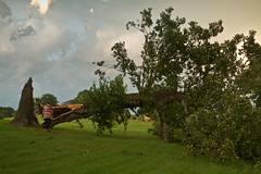 Tree Down in East Texas Storms (Ian Aberle) Tags: summer storm tree texas unitedstates 21 july saturday tyler 2012 troup knockedover canonef28135mmf3556isusm camera:make=canon exif:make=canon exif:focal_length=28mm geo:state=texas canoneos7d exif:iso_speed=640 geo:countrys=unitedstates exif:lens=ef28135mmf3556isusm camera:model=canoneos7d exif:model=canoneos7d ianaberle exif:aperture=35 geo:city=troup easttexasstorms