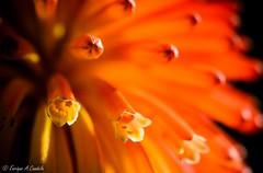 Spring (hunter of moments) Tags: parque light red orange naturaleza black flower color colour macro verde art primavera luz nature luces reflex spring rojo nikon natural negro flor natura catalonia botanico catalunya naranja d7000
