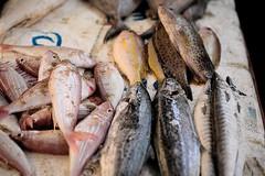 * (Gwenaël Piaser) Tags: india fish canon eos prime reflex market 85mm usm february fullframe poisson marché canoneos 1000 inde pondicherry février 6d 2014 85mmf18 pondichéry 24x36 ef85mm ef85mmf18usm canonef85mmf18usm ef85mmusm eos6d goubert puducherry புதுச்சேரி பாண்டிச்சேரி unlimitedphotos canonef85mm118usm canoneos6d gwenaelpiaser