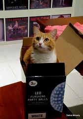 love in a box (damselfly58) Tags: cat furry feline funny chat gatti